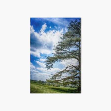 Cedar of Lebanon tree with blue sky Art Board Print