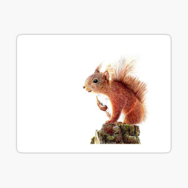 Cicero the Red Squirrel Sticker