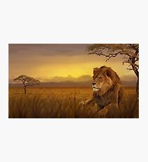 Lion savannah Photographic Print