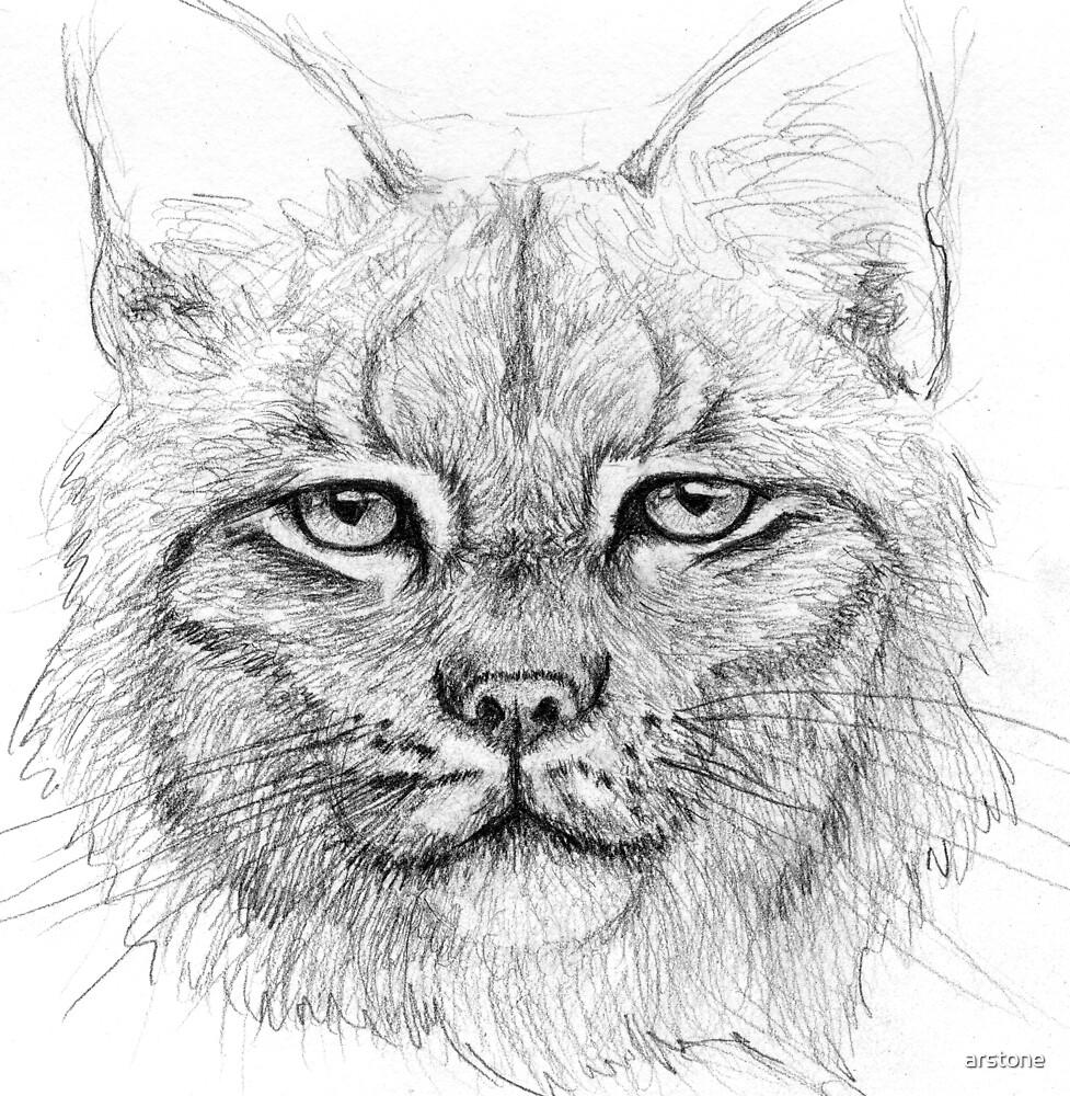 Lynx by arstone