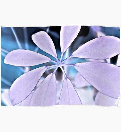 White Plant Poster