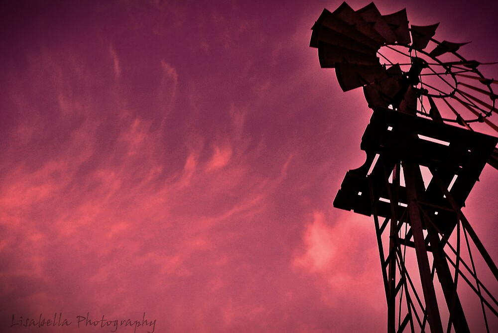 Purple Haze by lisabella
