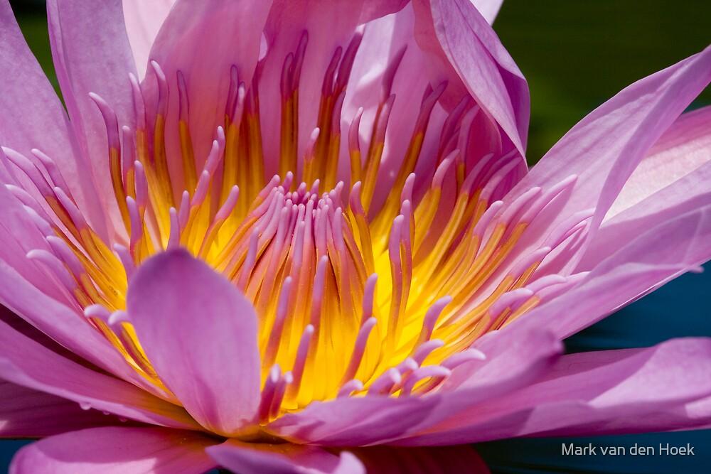 Lily by Mark van den Hoek
