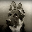 Indy in Black & White by Sandy Keeton