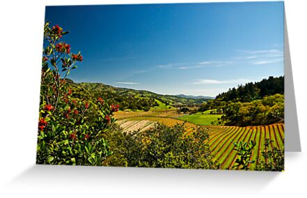 Springtime in the Napa Valley, California by MarkEmmerson