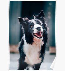 dog Smile iPhone cases! beautiful product for dogs and pets lovers Poster