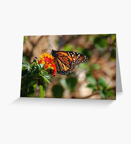 The sign of spring Greeting Card