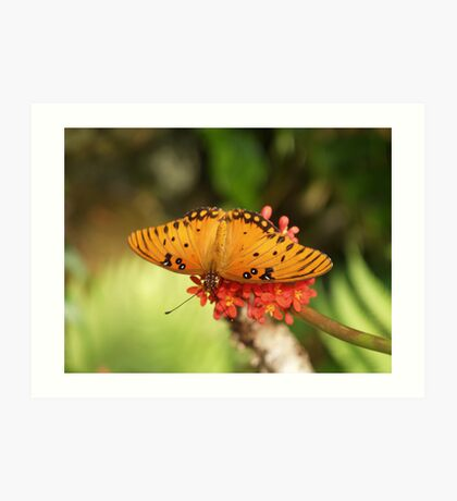 Almost Missed  --- Gulf Fritillary Butterfly Art Print