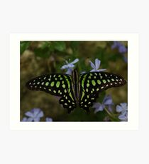 Neon --- Tailed Jay Butterfly Art Print