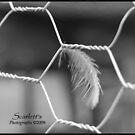 Feather  by MzScarlett