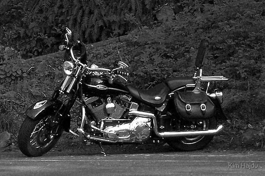 Harley by Kim Hajdu