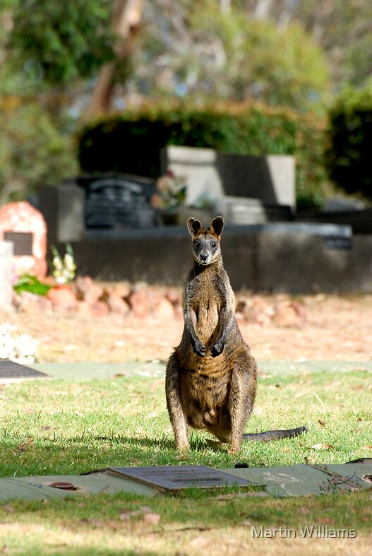 Wallaby by Martin Williams