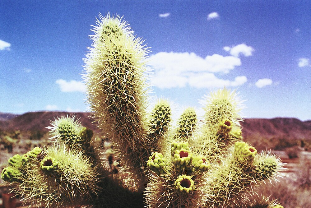 Jumping Cactus by James2001