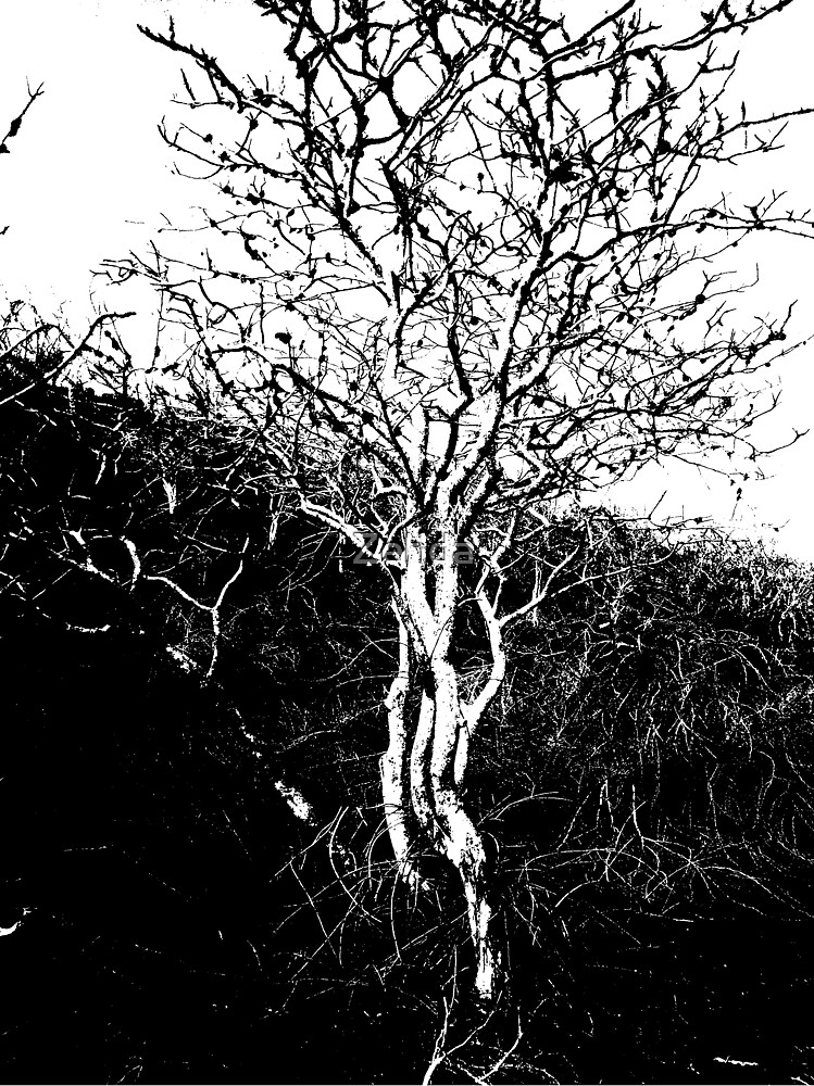 Solitary Tree by Zehda