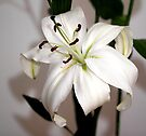 White Lily in Macro by Carole-Anne