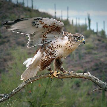 The Hawk  by GVAZDesigns