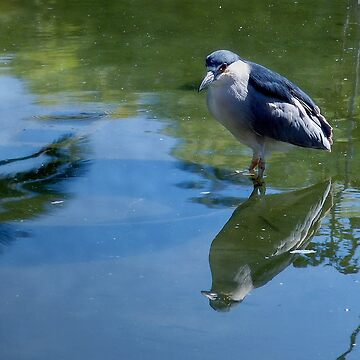 Reflection by GVAZDesigns