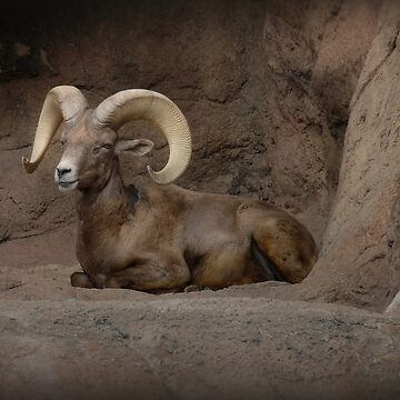 Majestic Big Horn by GVAZDesigns