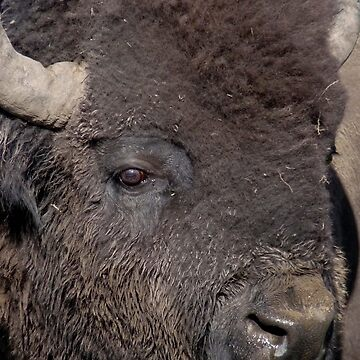 The Great American Bison by GVAZDesigns