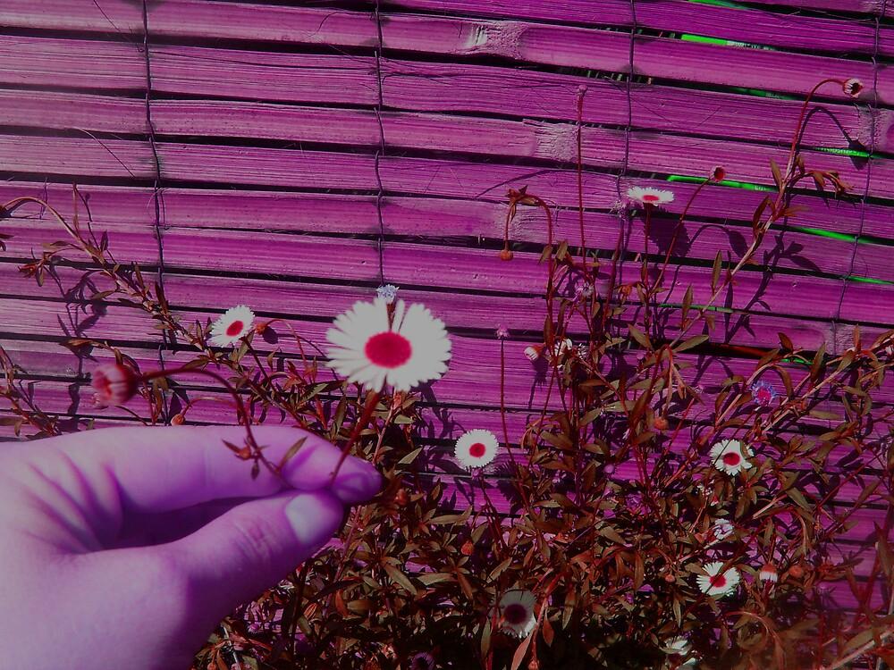 Pick Me A Flower... by visualmetaphor