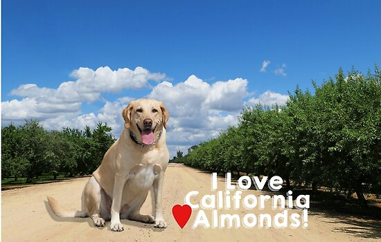 Lab Love California Almonds by MomMcWin