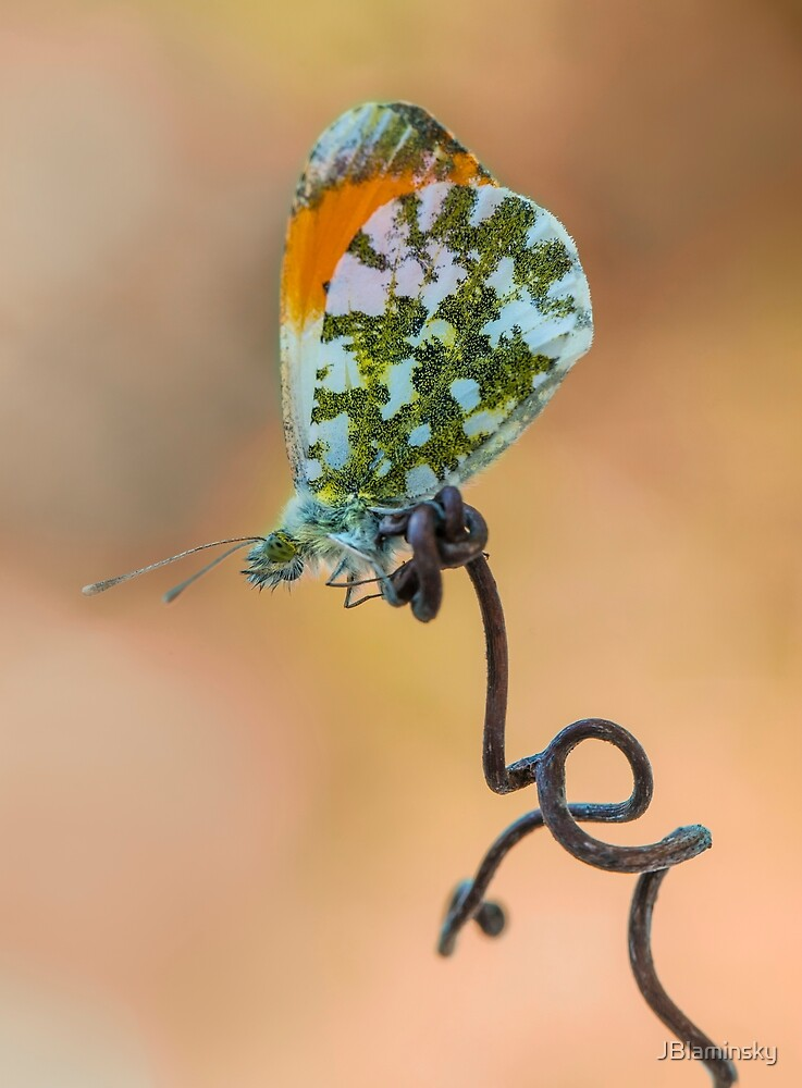 Green and orange small butterfly on curly branch by JBlaminsky
