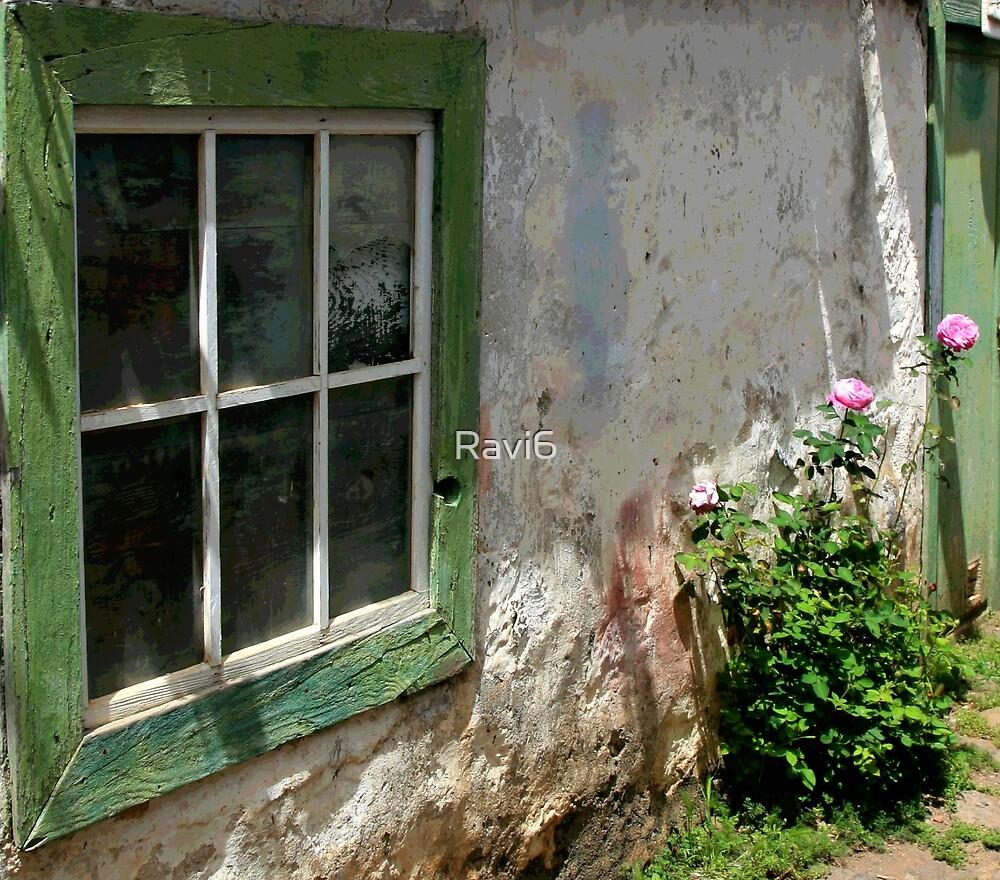 Green Window by Ravi6