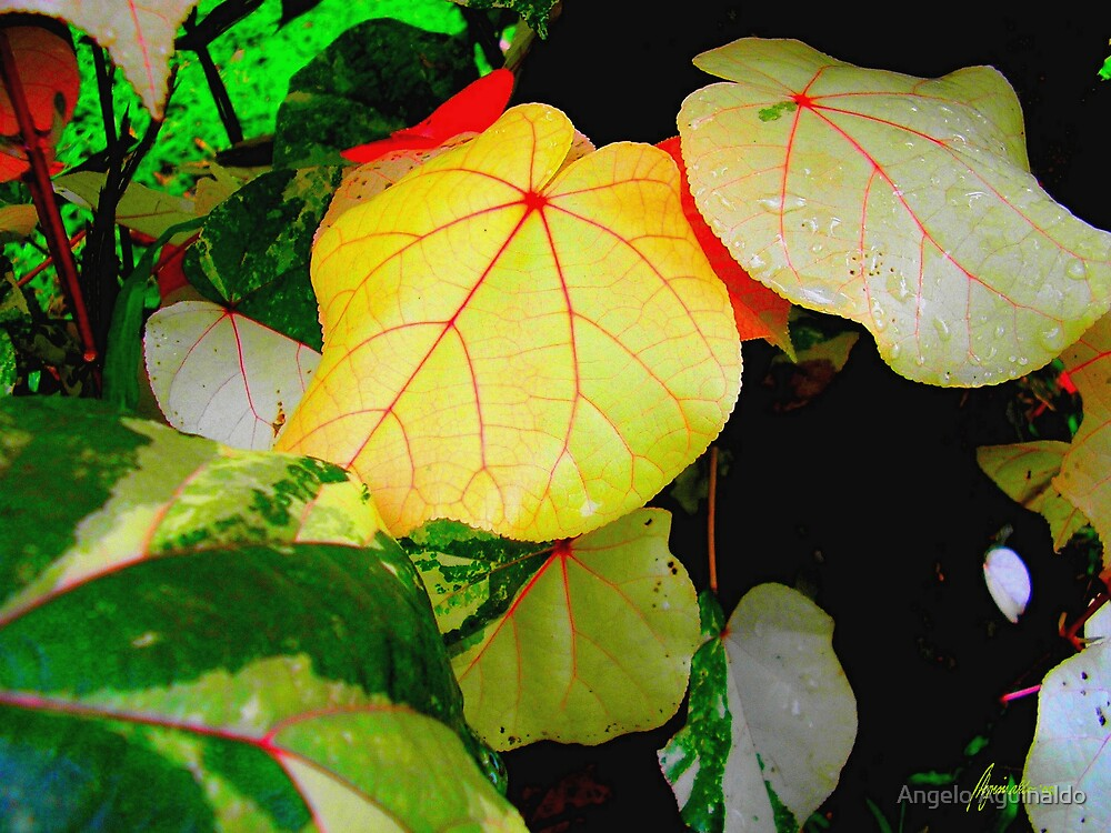 Foliage 3 by Angelo Aguinaldo