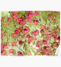 soft blossoms Poster