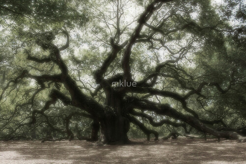Angel Oak by mklue