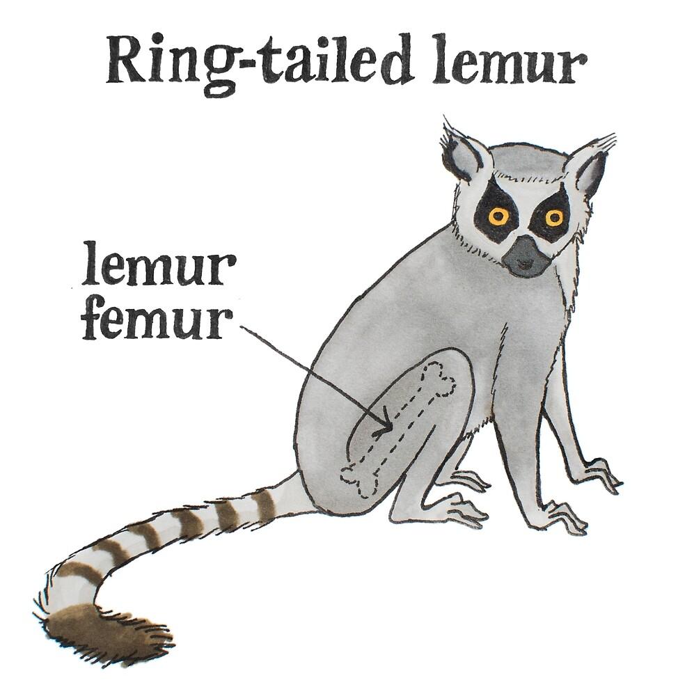Lemur femur by EBG draws