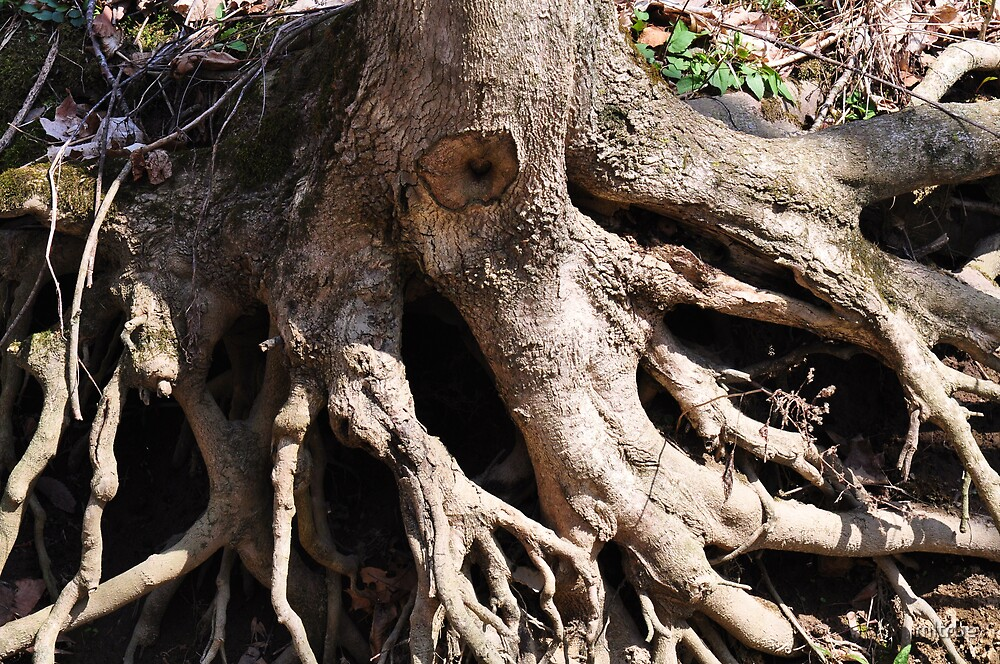 Tree Root Monster-Its Alive!! by mltrue