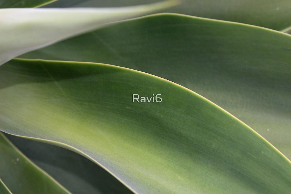 Leaves by Ravi6