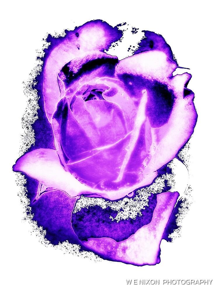 Purple Rose by W E NIXON  PHOTOGRAPHY