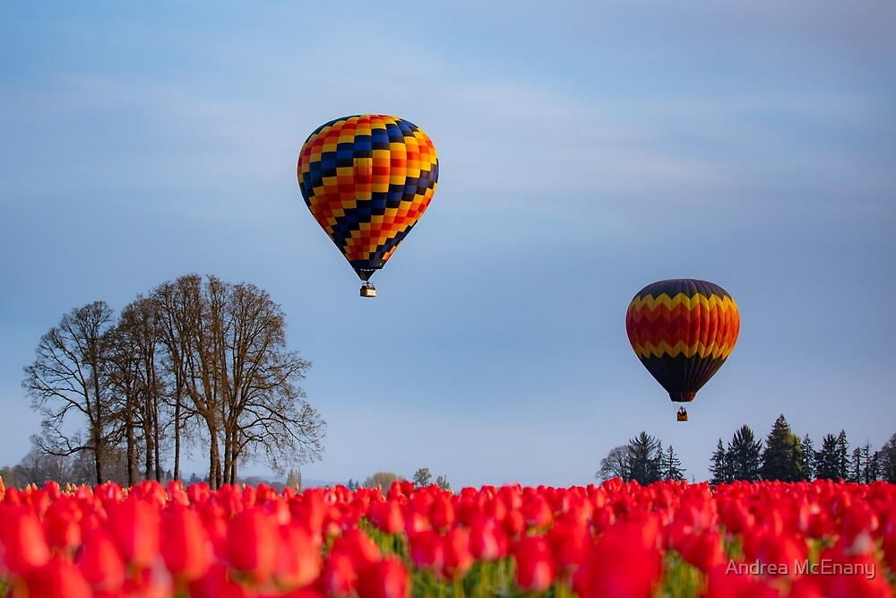 Hot Air Balloons Over the Tulip Field by Andrea McEnany