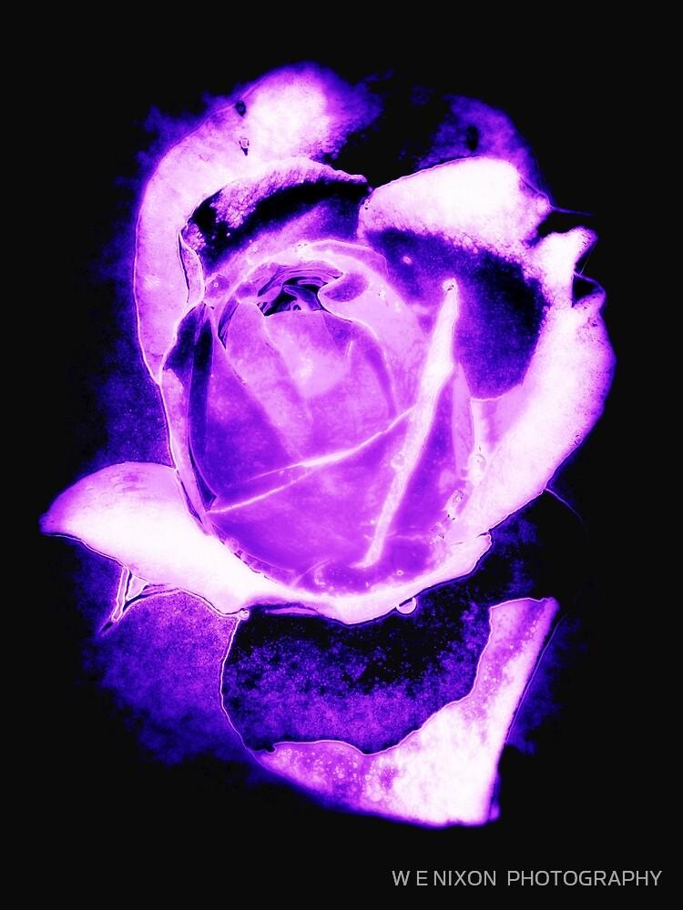 Purple Rose (Black Background) by W E NIXON  PHOTOGRAPHY