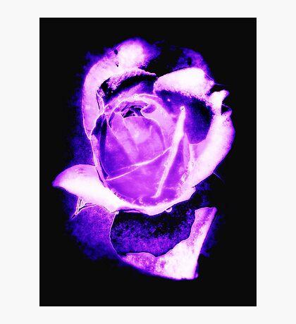 Purple Rose (Black Background) Photographic Print