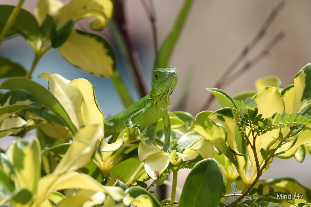 Lizar by Mindy47