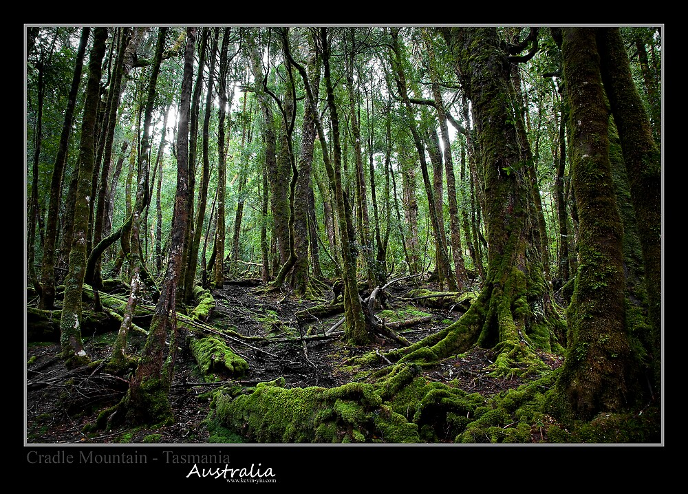 King Billy Tack - Cadle Mountain, Tasmania by Kevin Yiu