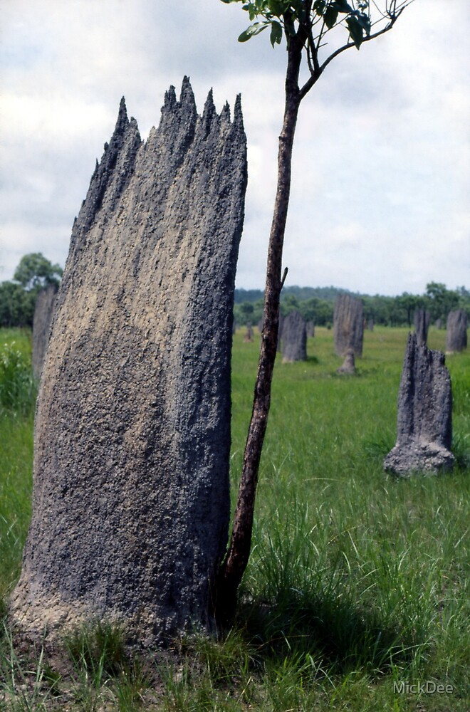 Termite mound - Northern Territory by MickDee