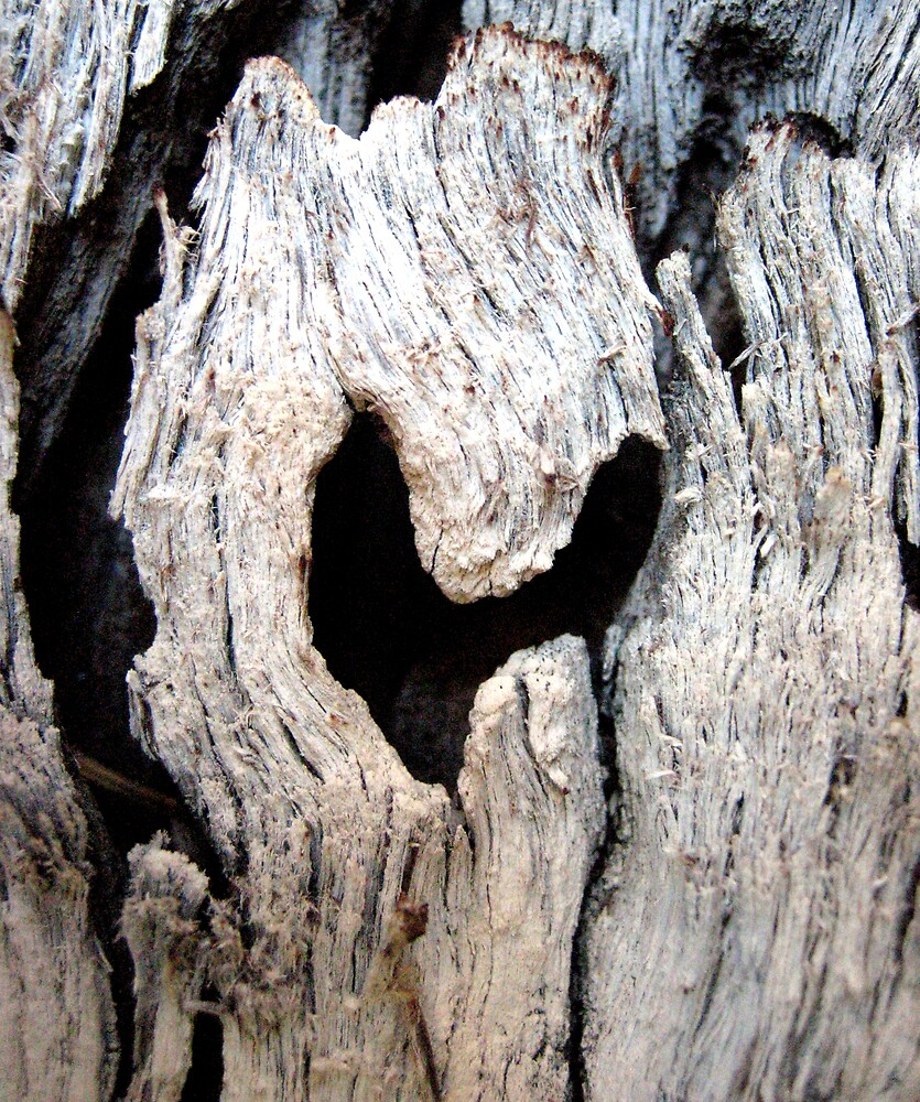 Love of Trees by Kylie Newton