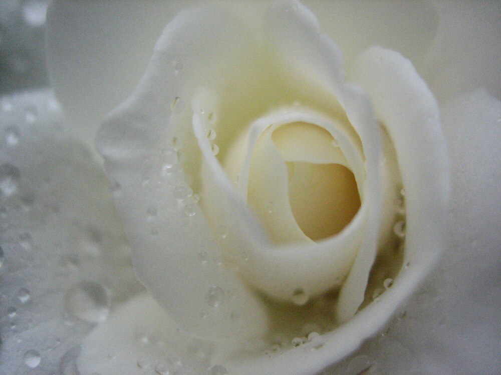 Pure Petals by Kylie Newton