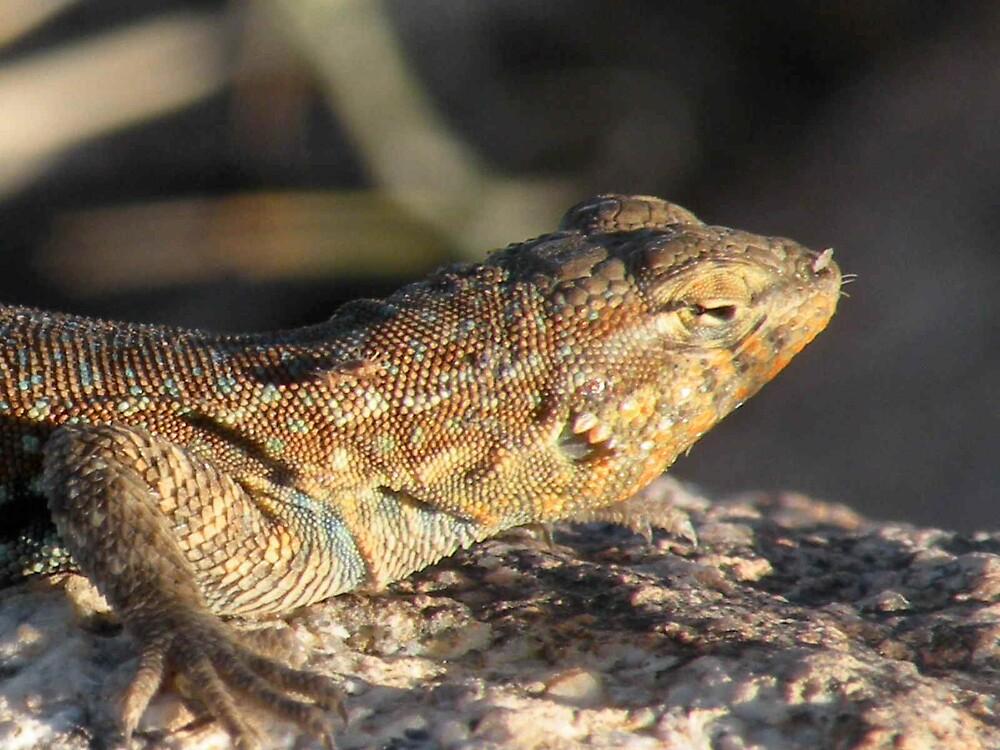 Lizard atop a mountain ! ! by Bonnie Pelton