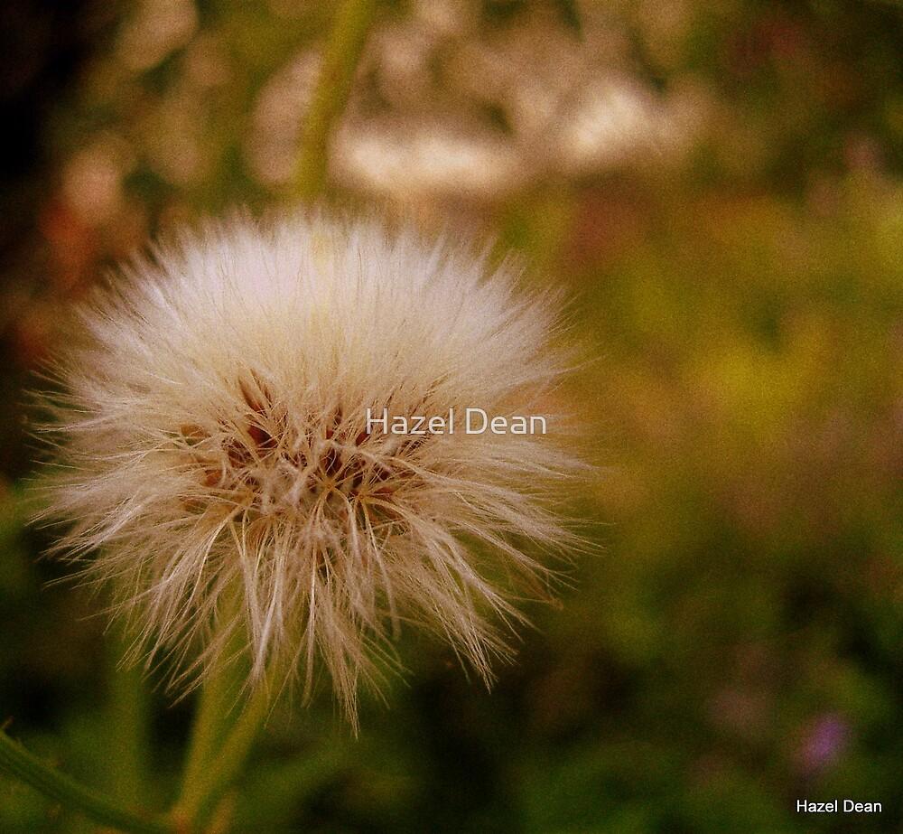 Make A Wish... by Hazel Dean