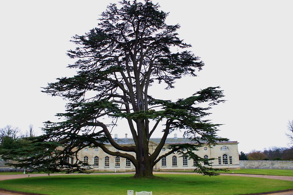 Tree by Anna Leworthy