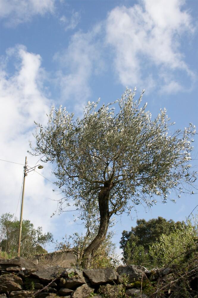 Olive tree and lamp post by ElisaAnedda