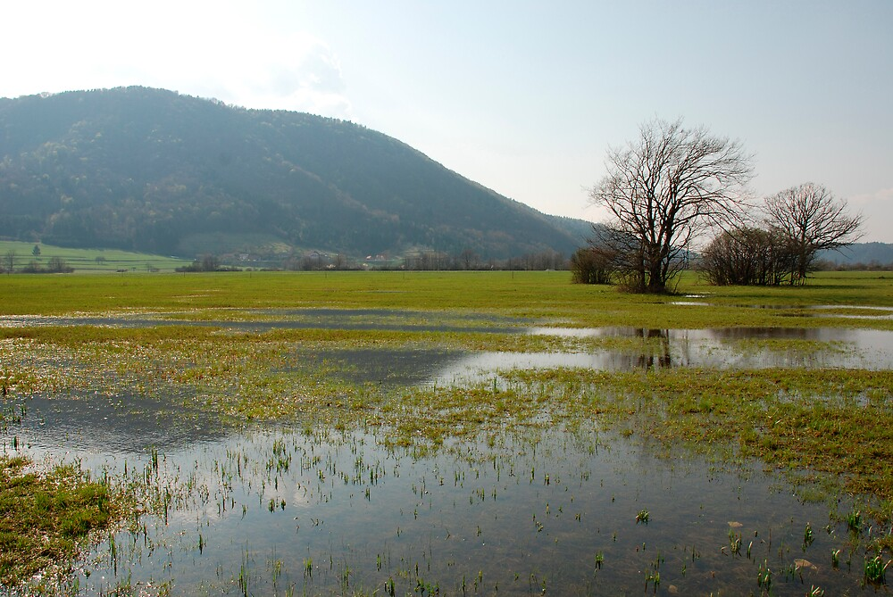 Slovenian Wetlands by jojobob