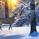 Snow Deer by Walter Colvin