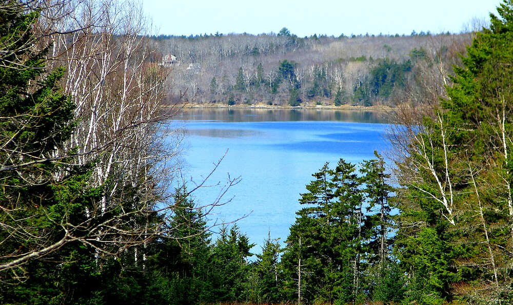 A Bay in Maine by Patty Gross