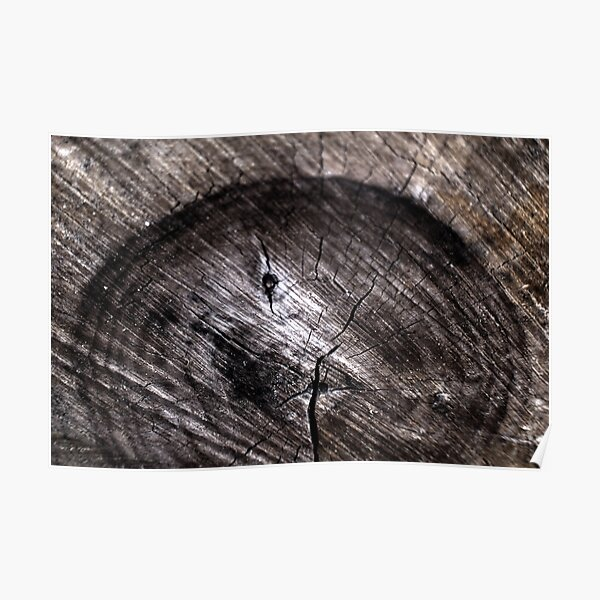 Ode to: Tree Rings Poster